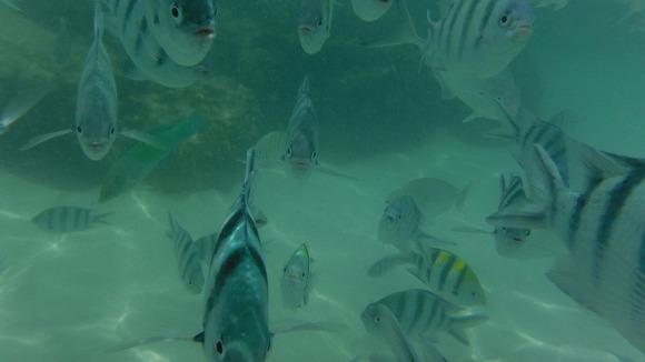 바다7.jpg